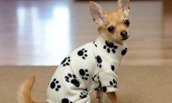 فرا رسیدن فصل زمستان و روش نگهداری از حیوانات خانگی