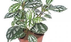 راهکارهای آموزشی برای نگهداری از گیاهان آپارتمانی